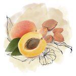 Apricot seed powder